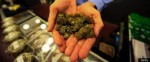 9875467b64ontana.jpg 150x62 Marijuana Should Be Legal, 55 Percent Say